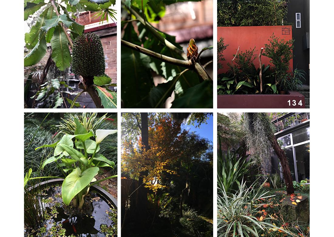Camperdown Courtyard Garden Features